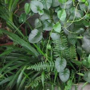 Комнатные растения условно делятся на