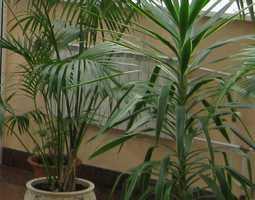 растения-формы